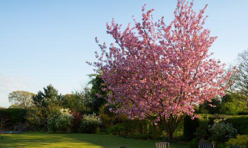 3 Tips om je tuin te onderhouden