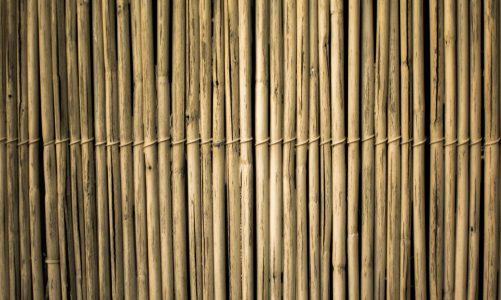 Op zoek naar bamboe stokken? Kies uit deze soorten